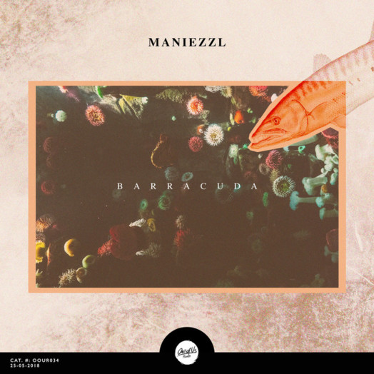 Maneizzl / Barracuda